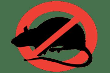 Công ty dịch vụ diệt chuột hiệu quả (TpHCM và các tỉnh)