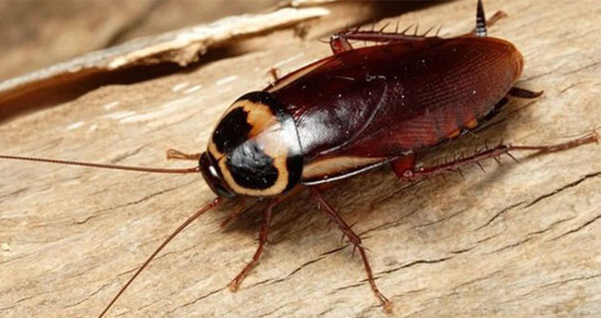 dịch vụ diệt côn trùng gián