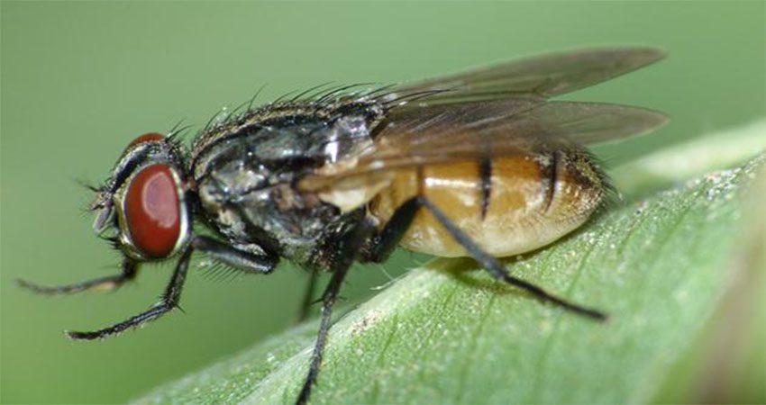 dịch vụ diệt côn trùng ruồi