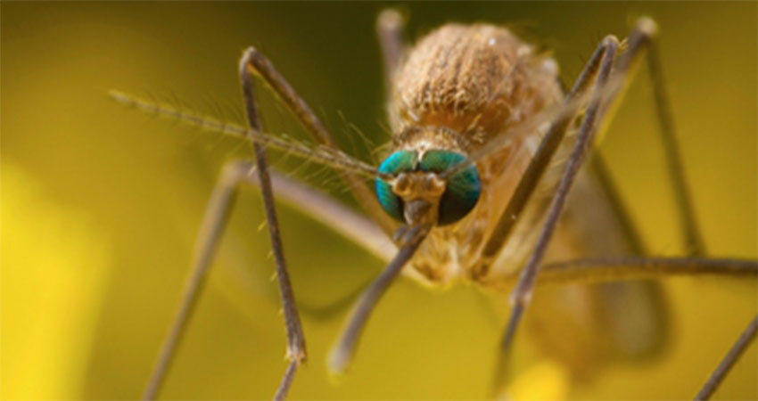 công ty dịch vụ diệt muỗi tại nhà
