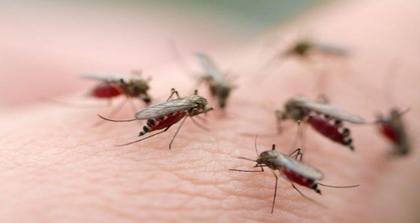 Mẹo: những cách diệt và đuổi muỗi hiệu quả