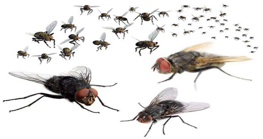 Những cách đuổi và diệt ruồi đơn giản – hiệu quả cao