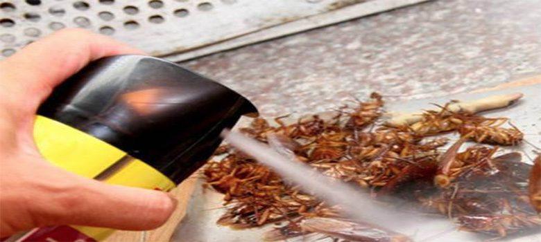 Thuốc diệt côn trùng chứa nhiều chất độc