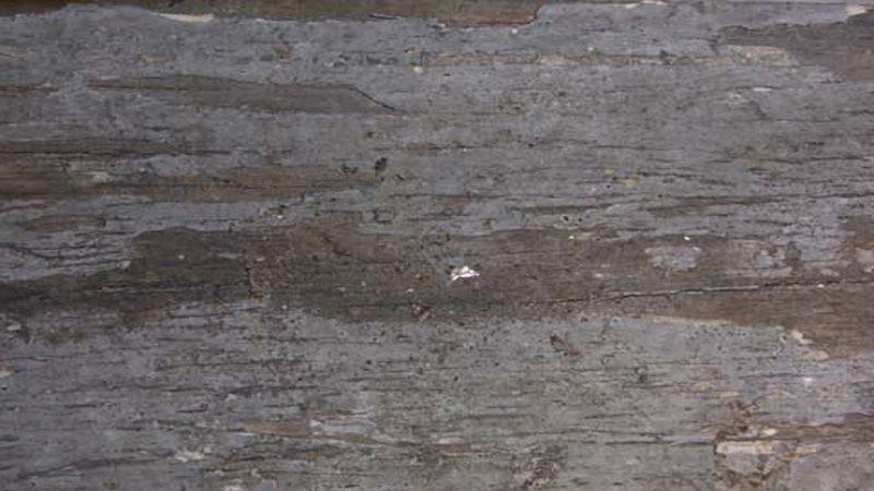 Gỗ bị mồi tấn công thường có bề mặt bên ngoài nguyên vẹn