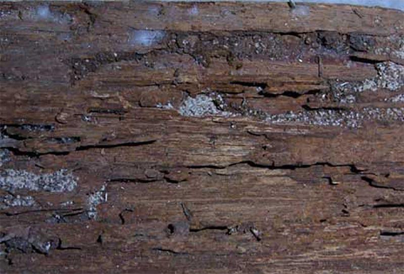 Hỉnh ảnh mối tàn phá bên trong gỗ