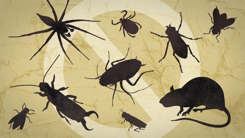 Phòng chống côn trùng xâm nhập vào nhà để bảo vệ gia đình