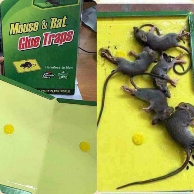 dịch vụ diệt chuột 2