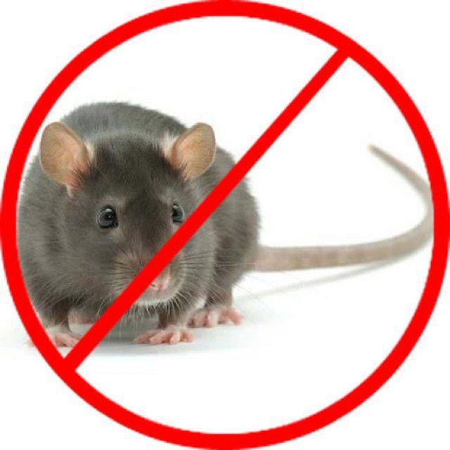dịch vụ diệt chuột 3