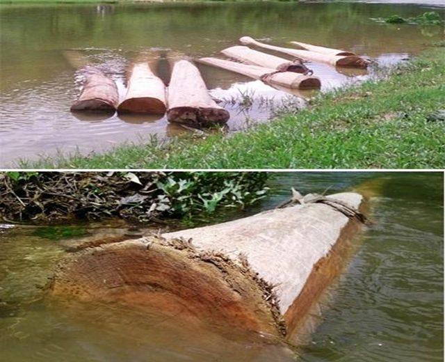 diệt mối bằng phương pháp ngâm gỗ