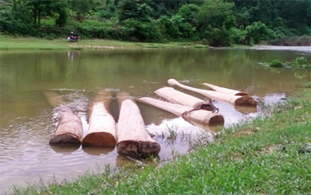 ngâm gỗ trong nước để đuổi mối