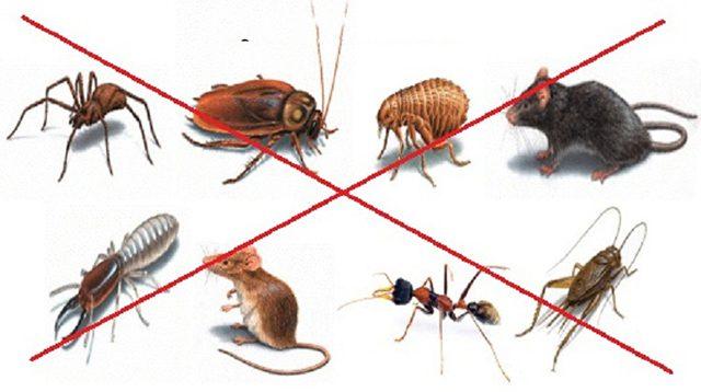 dịch vụ diệt côn trùng tại Hà Nội 1