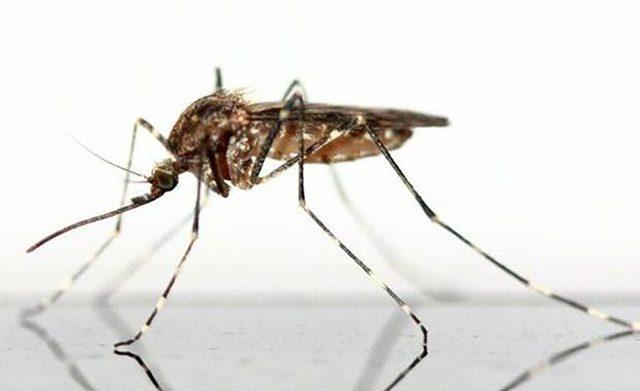 diệt côn trùng phòng bệnh 4
