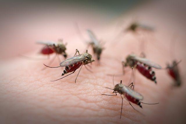 Sốt Rift Valley do muỗi