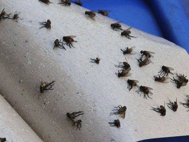5 Cách diệt ruồi giấm trong nhà vệ sinh hiệu quả (TRIỆT ĐỂ)