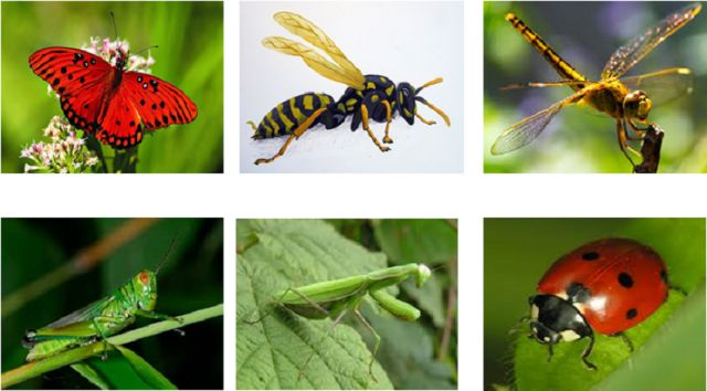 Vòng đời của côn trùng 2