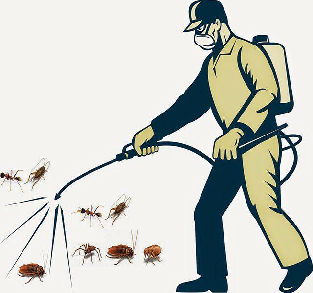 Dịch vụ diệt kiến tại Hạnh Long