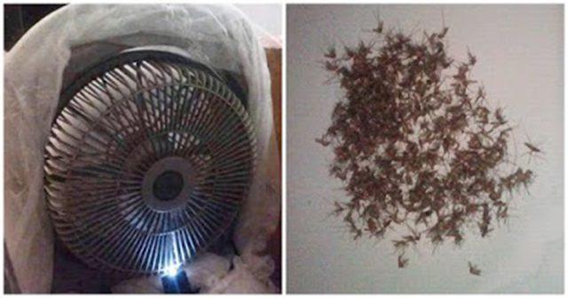 TOP 4 Cách bẫy muỗi hiệu quả tại nhà bạn nên thử