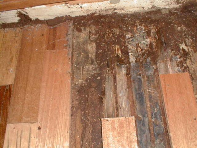 Cách xử lý gỗ chống mối mọt 1